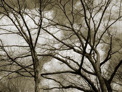 winter_forest.jpg